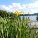 jardin des simples de l'ïle de Vassivière dans le Parc Naturel Régional de Millevaches